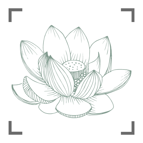 Illustration of a lotus flower Live online Class
